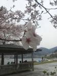 2012_04_19_03.jpg